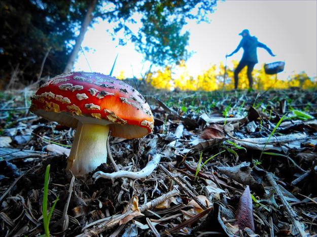 mushroom_hunter_0