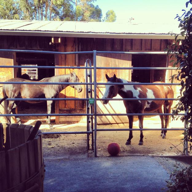 Horses at Cooper Garrod Winery