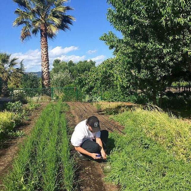 Foraging Del Dotto Garden