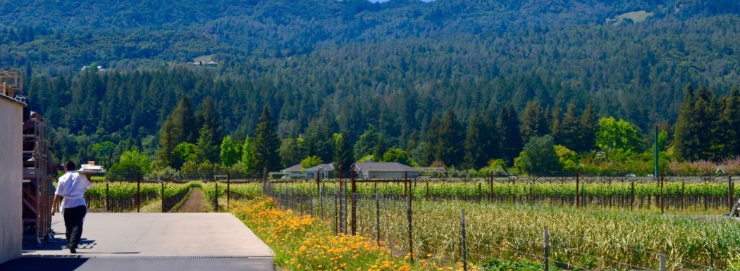 Del Dotto Vineyards in Napa Valley - A Lot More Than Just Wine