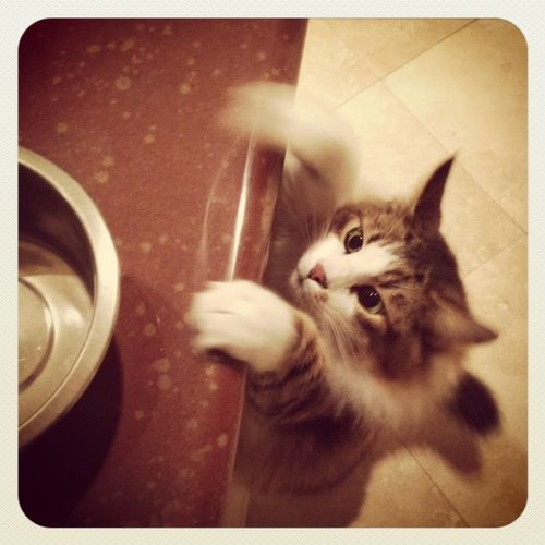 Romy-the-Cat